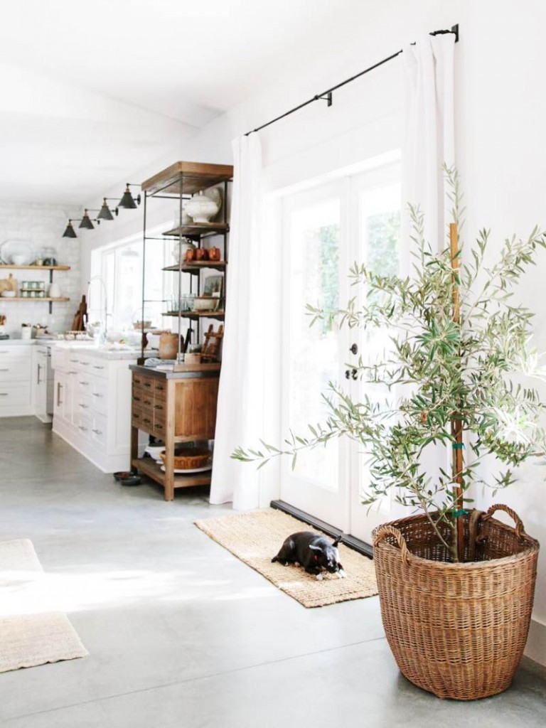 Plantas de Moda para la decoraci贸n de interiores